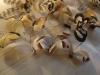 denise-plumes-bijoux